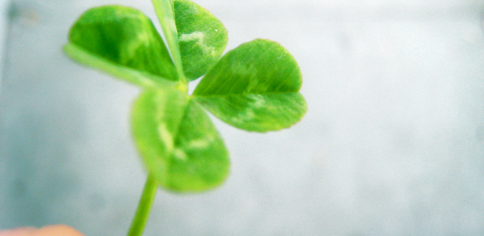 Luck essays